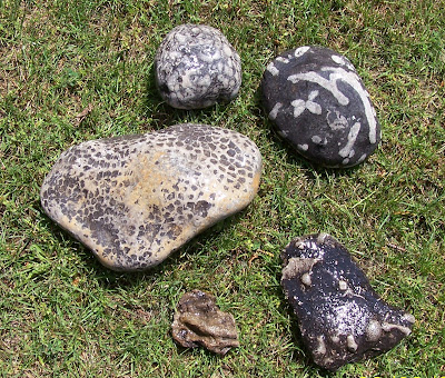 Yard Rocks And Fossils Alans Rock Collection