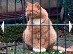 gato gigante-3