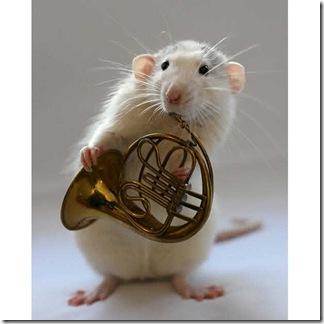 French-horn_1448647i