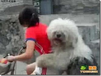 ride_a_bike_with_a_dog_4