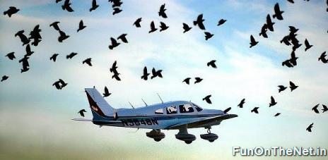 Birds Vs Planes