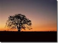 tramonti144_sfondipertutti_min