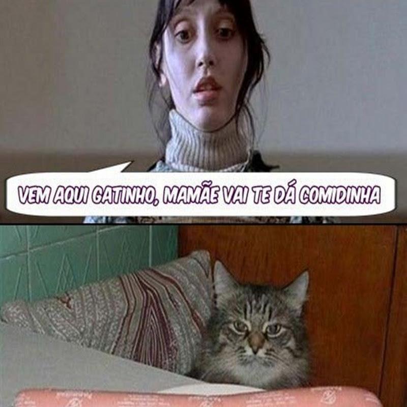 Gato Frustrado - Humor