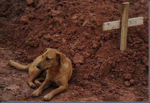 Brasile Leao, il cane che veglia la padrona morta