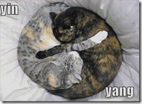 funny-pictures-yin-yang-cats