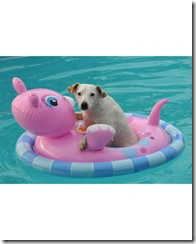 pets_at_play_6670159_16621526_xl