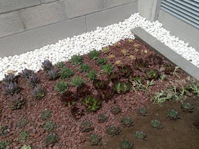 cubierta vegetal de crasas