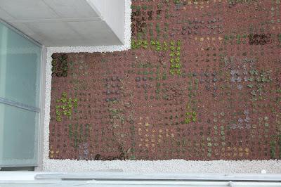 diseño de cubiertas vegetales