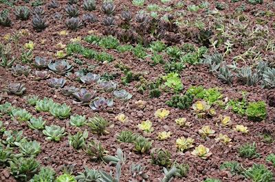 cubierta vegetal con crasas
