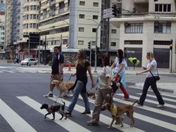 Cãonhecendo São Paulo (70)