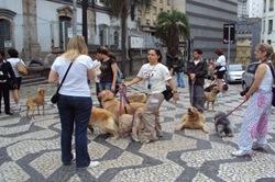 Cãonhecendo São Paulo (121)