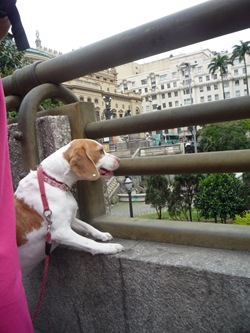 Cãonhecendo São Paulo (268)