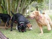Dogs Trekking 3 (18)