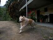 Dogs Trekking 3 (24)