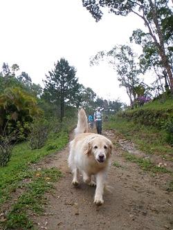 Dogs Trekking 3 (48)