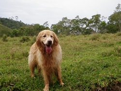 Dogs Trekking 3 (108)