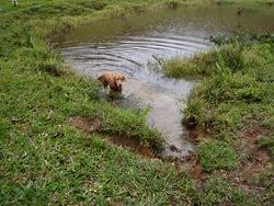 Dogs Trekking 3 (166)
