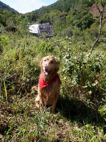 Dogs Trekking 3 (325)