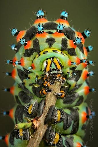 Dunia serangga yang glamour (1)