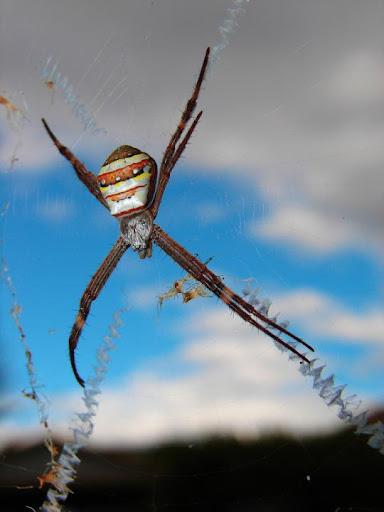jaring laba-laba