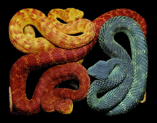 Painting from Pictures of Snakes