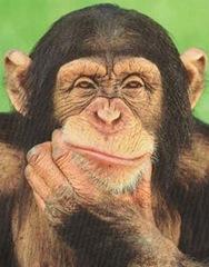 thinking-monkey1