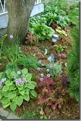 newly mulched foundation bed with coleus