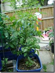sub-i planter SIP #2