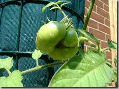garden aug 09 2009-08-09 094