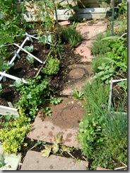 garden aug 09 2009-08-09 068