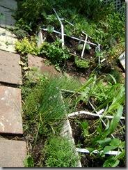 garden aug 09 2009-08-09 069