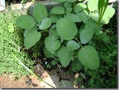 garden aug 09 2009-08-09 070