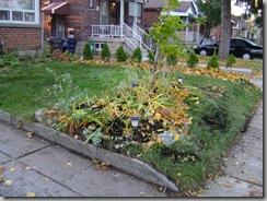 garden fall 020