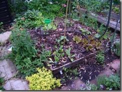 plants 016