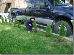 naomi and the baby trees