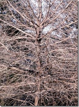 florida winter reprised 020