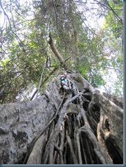 Khao Yai: Felix is climbing on a tree