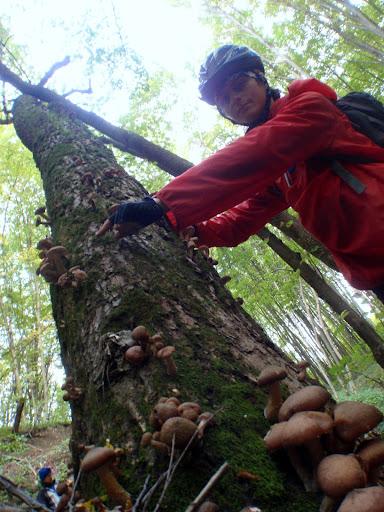 гриби в лісах