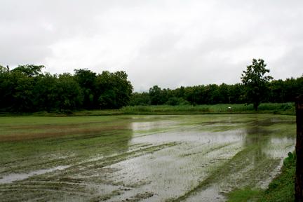 IMG_8661_Rice_paddies_in_rain_4x6x72.X2fMcbnfCMCW.jpg