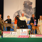 CELJE EUROPEAN DOG SHOW-SLOVENIA-2010-10-01e.jpg