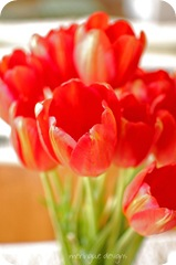 red tulips 008 copy