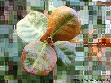 Plants III (150)