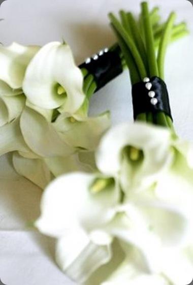 _MG_9097 flowers on mars