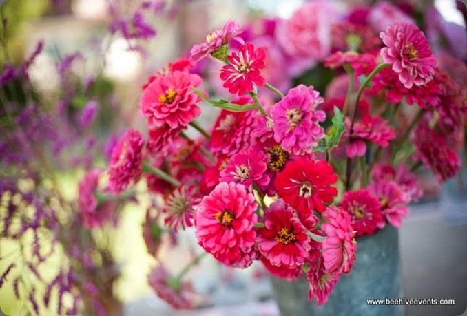 devon-0030 beehive events