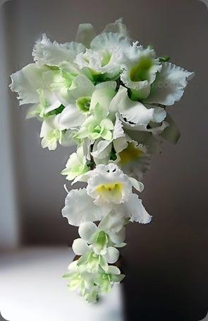 solomon bloemen22