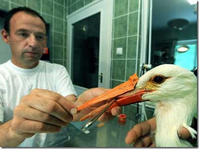Artificial_Beak_Stork