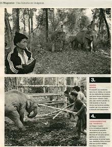 Un elefante bebé golpeado para que obedezca a sus raptores.
