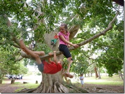 26 HS treeclimbing