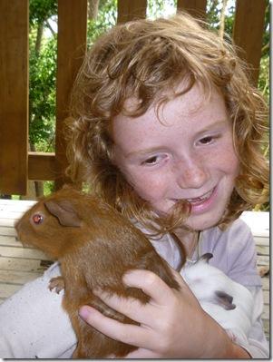 16 guinea pigs