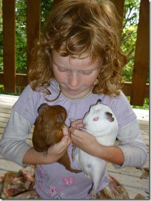 15 guinea pigs
